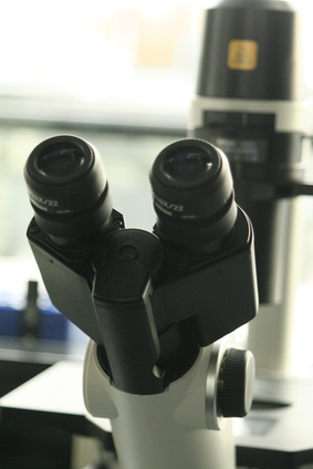 Types of 3D Microscopes