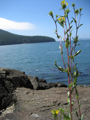 rv hookups seattle West of seattle, the kitsap peninsula is an oasis for people who love the outdoors the park has tent and rv campsites with full hookups, hiking trails.