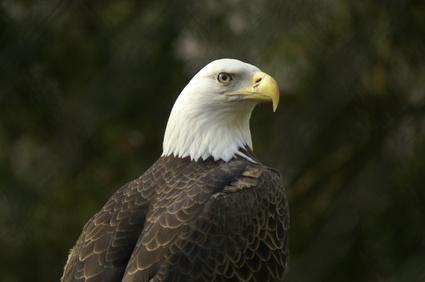 Mexican Eagle Vs. American Eagle