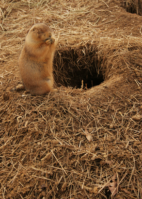 How To Kill Rodents Underground Ehow Uk