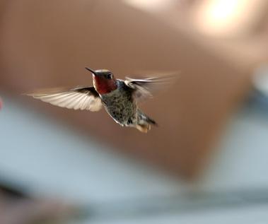 How to Heal a Broken Hummingbird Wing