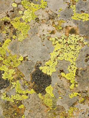 Causes Of Mold On A Bathroom Ceiling Ehow Uk