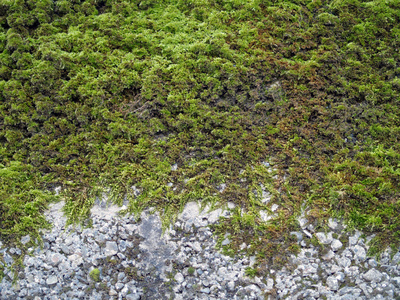 How To Use Tide Detergent For Moss Removal Ehow Uk