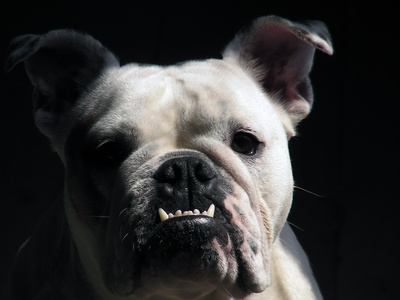 How to Get a Dog's Teeth White If They Are Green