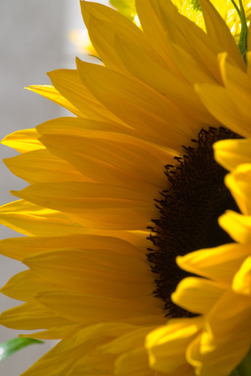 How To Make A Tissue Paper Sunflower Ehow Uk
