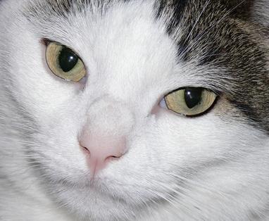 Cartiage Un Cat Food