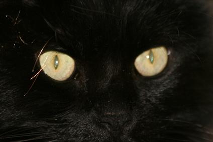 Eye Discharge, Lethargy & Weakness in Felines