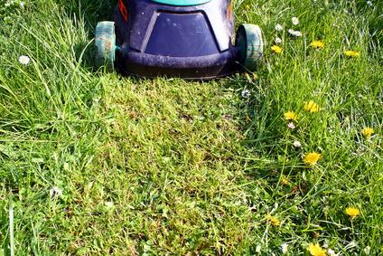 Qu se necesita para iniciar un negocio de cortar el for Se necesita jardinero