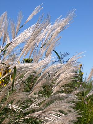 Ornamental grass landscaping ideas ehow uk for Tall grass landscape ideas