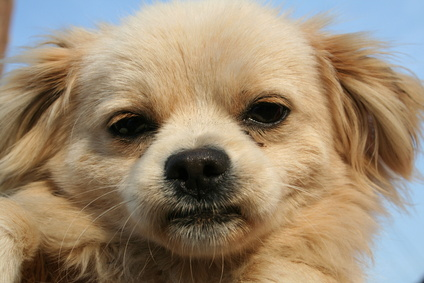 How to Treat a Dog Rash Around the Eye
