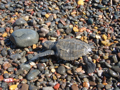 What Do Turtles Need to Live?