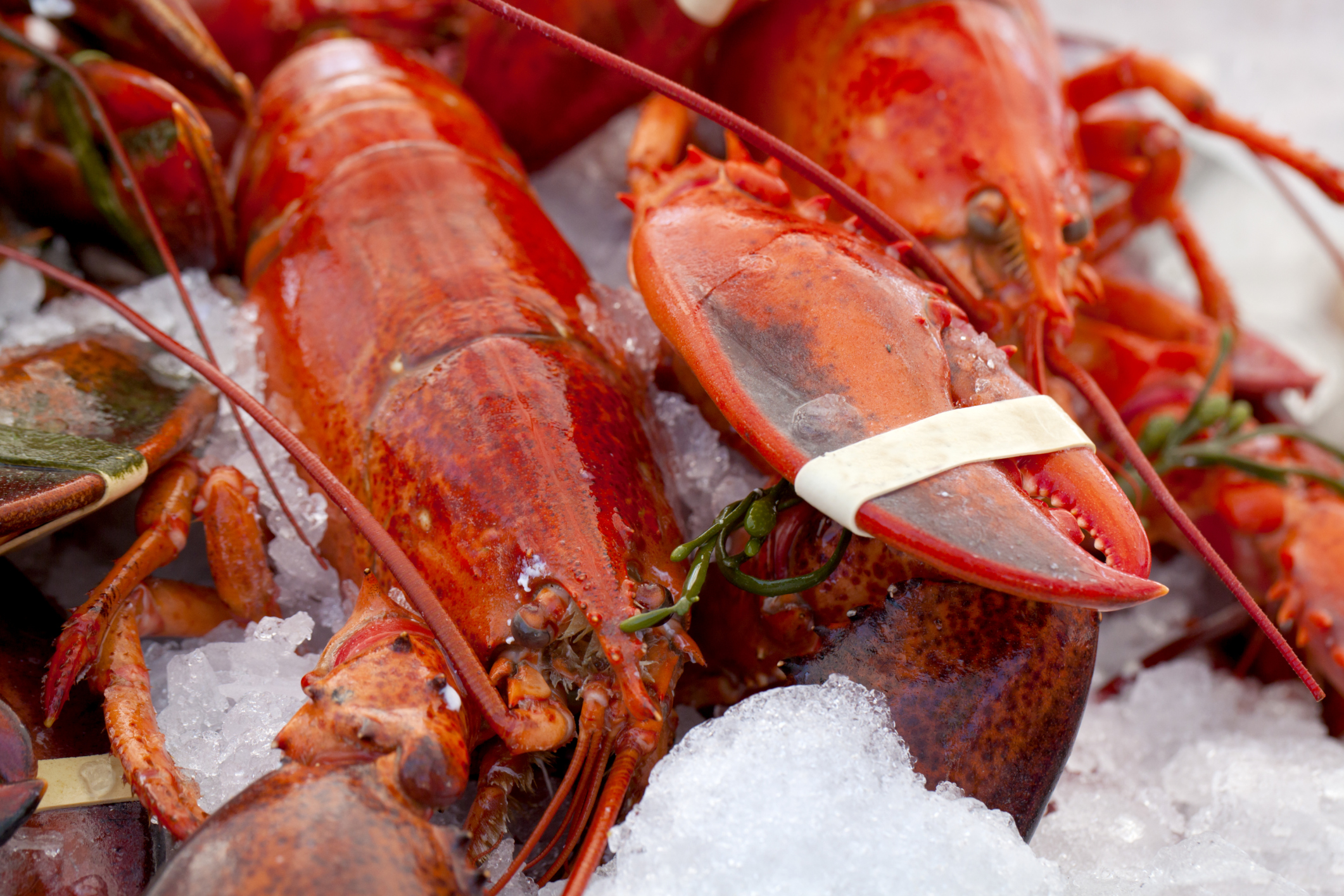 How to Keep Crawfish Alive Before Boiling | LEAFtv