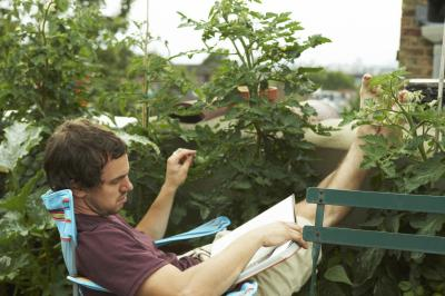 Tall Plants To Create A Privacy Balcony Home Guides Sf