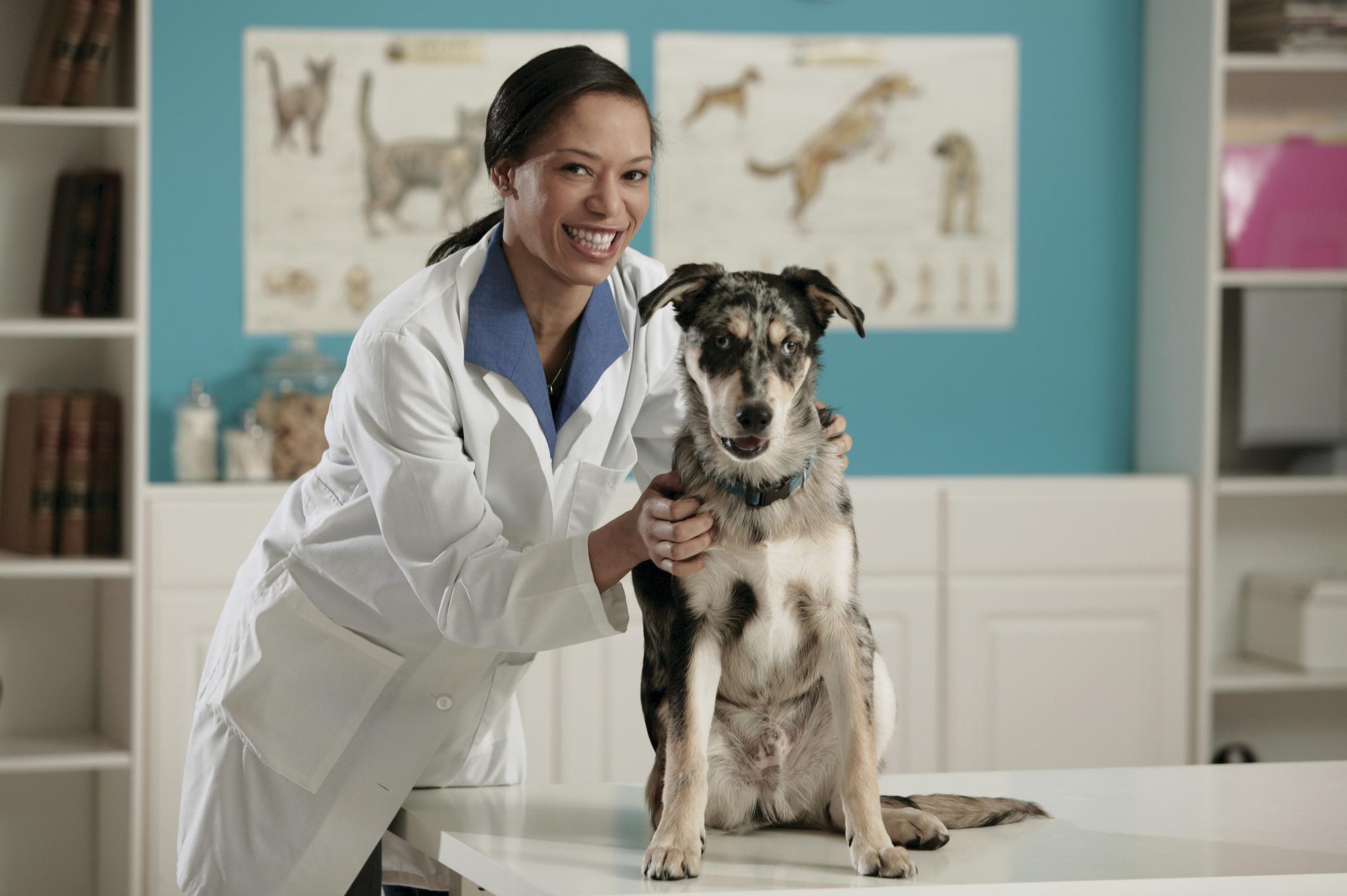 the salary of pharmacists vs  veterinarians