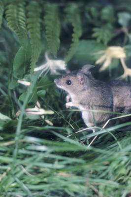 How To Get Rid Of Field Mice Naturally Home Guides Sf Gate