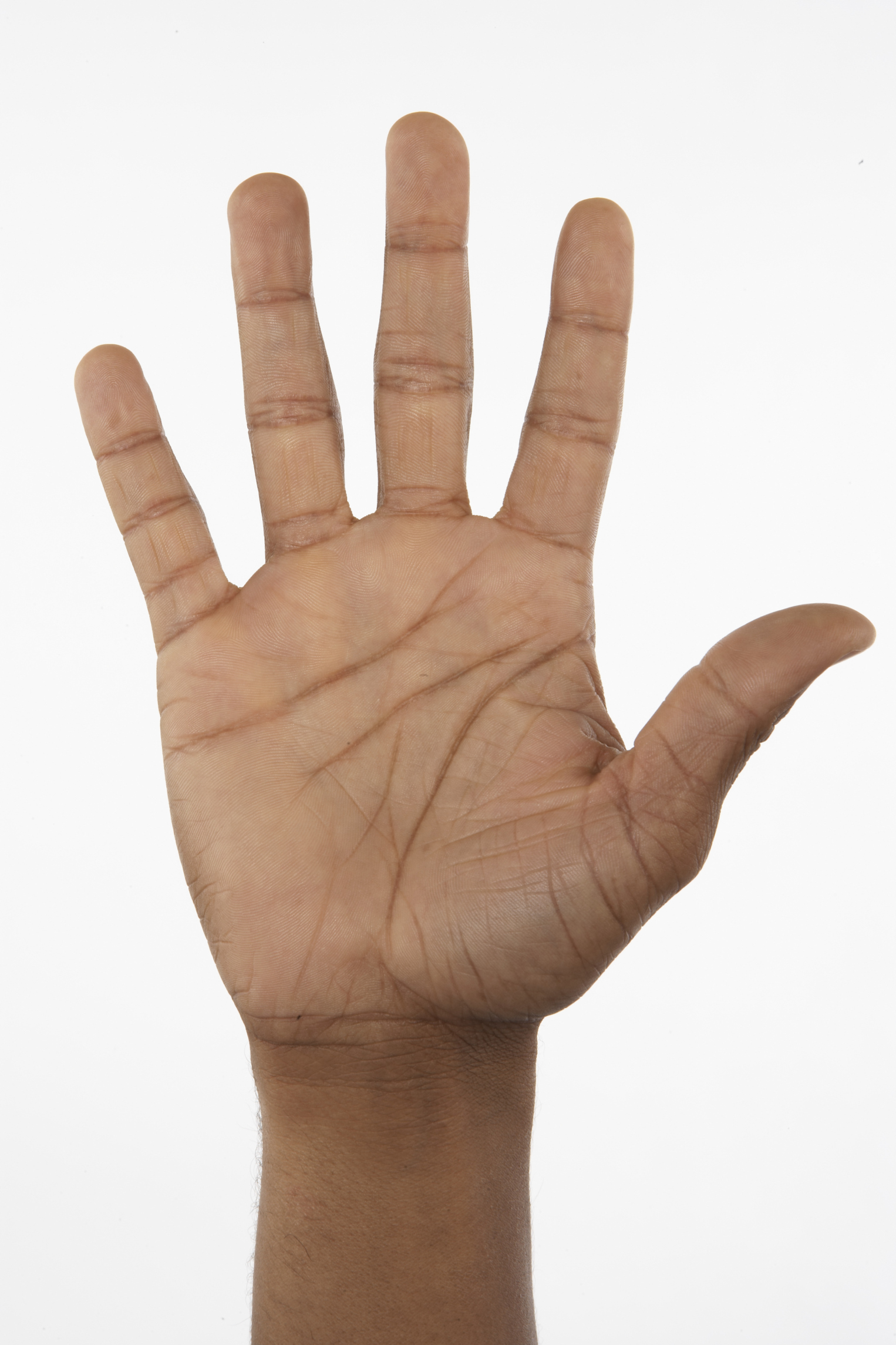 Muscles That Control the Human Hand | LIVESTRONG.COM