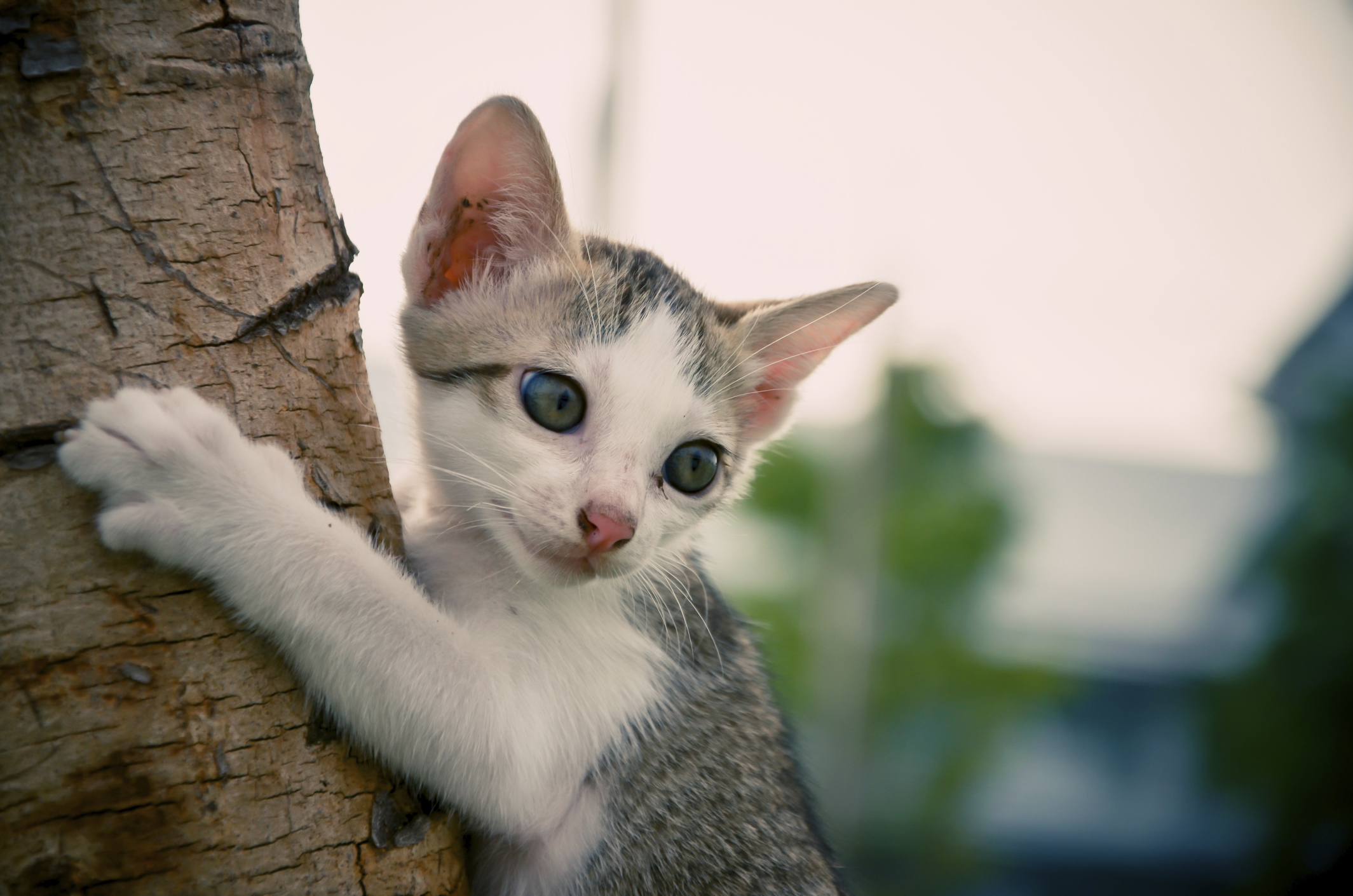 How to build a cat tree animals for Build a cat perch