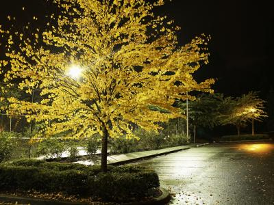 Landscape lighting for trees home guides sf gate