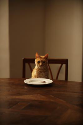 simons cat birthday