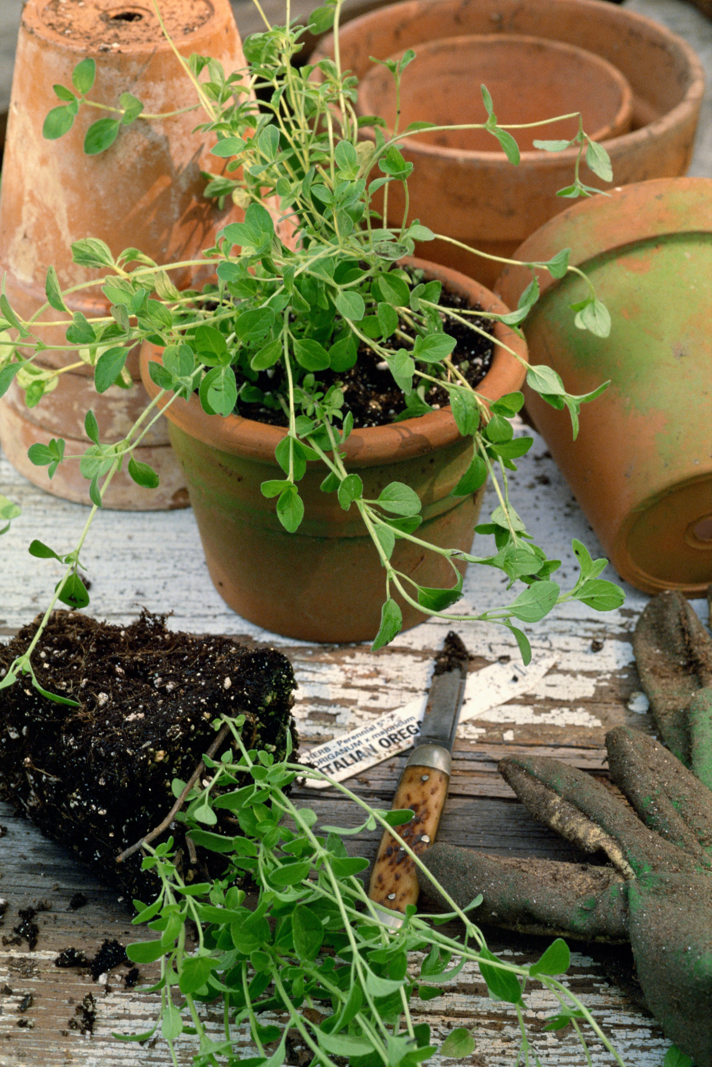 The Best Ways to Take Care of a Potted Herb Garden Home Guides