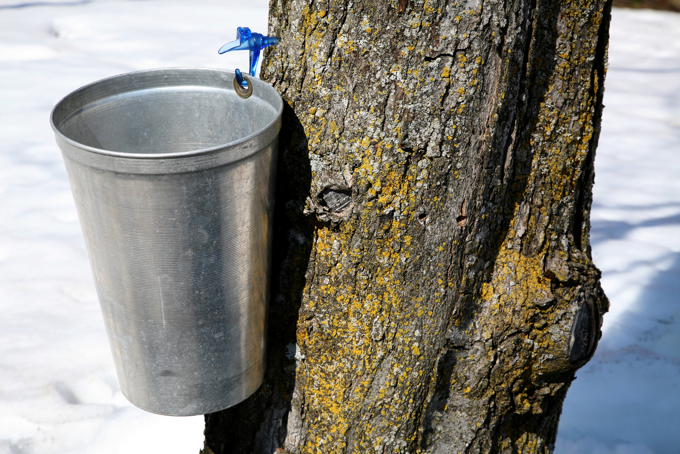 Homemade Maple Syrup Taps Sciencing