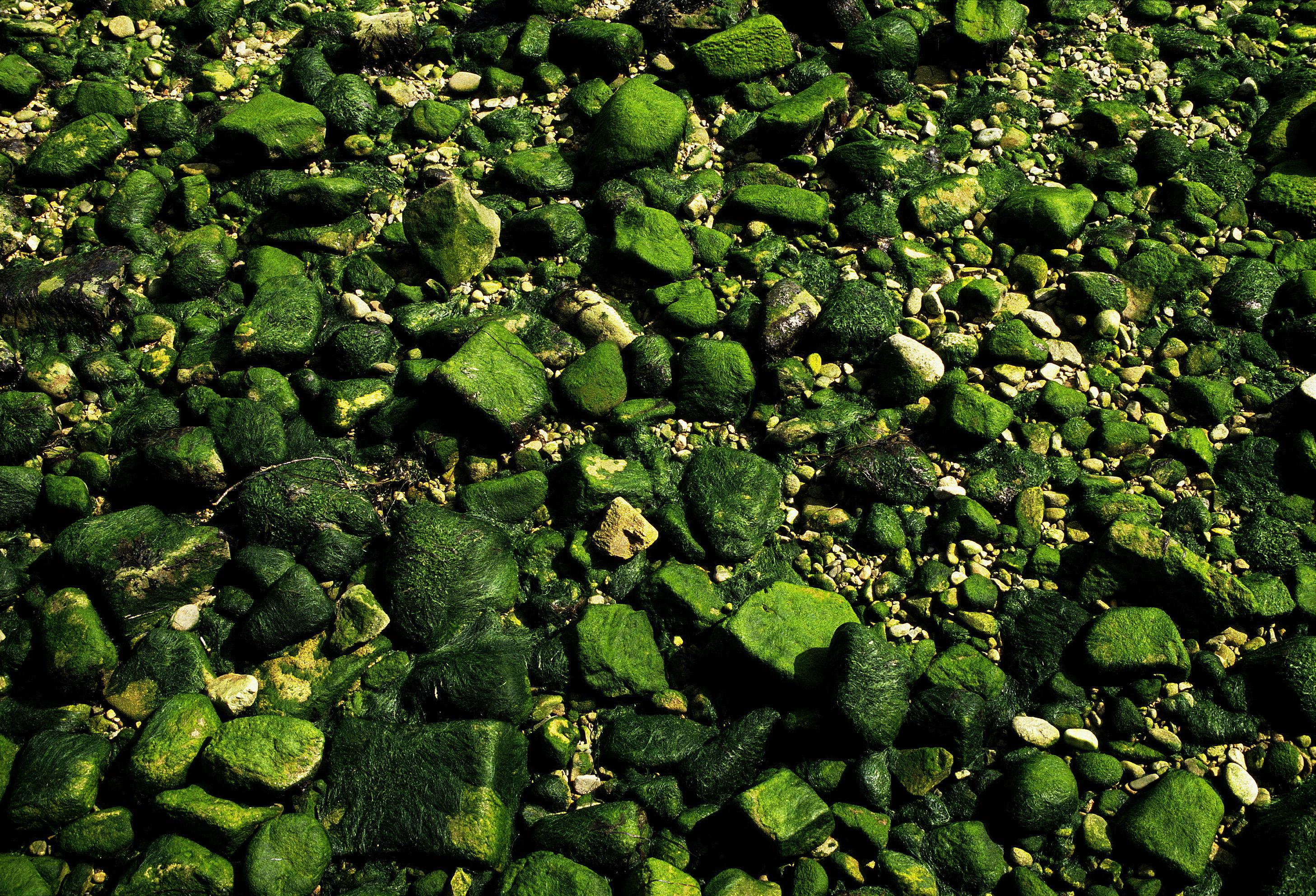 How To Kill Moss On Gravel Hunker