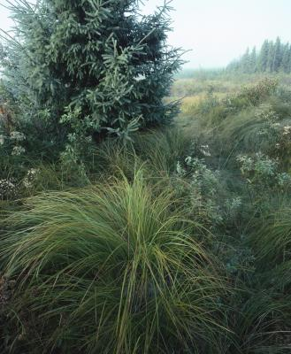 Ornamental grasses that look good all year round home for Low mounding ornamental grasses