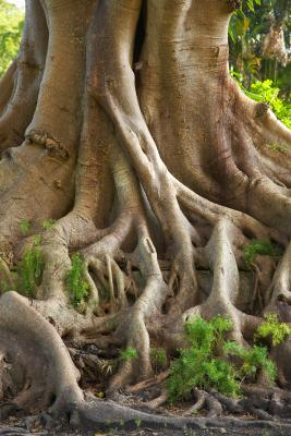 How To Drill Tree Roots Apply Chemicals Home Guides