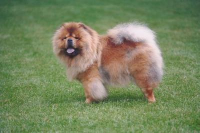 What Kinds of Dogs Have Puffy Tails? | Dog Care - The Daily Puppy
