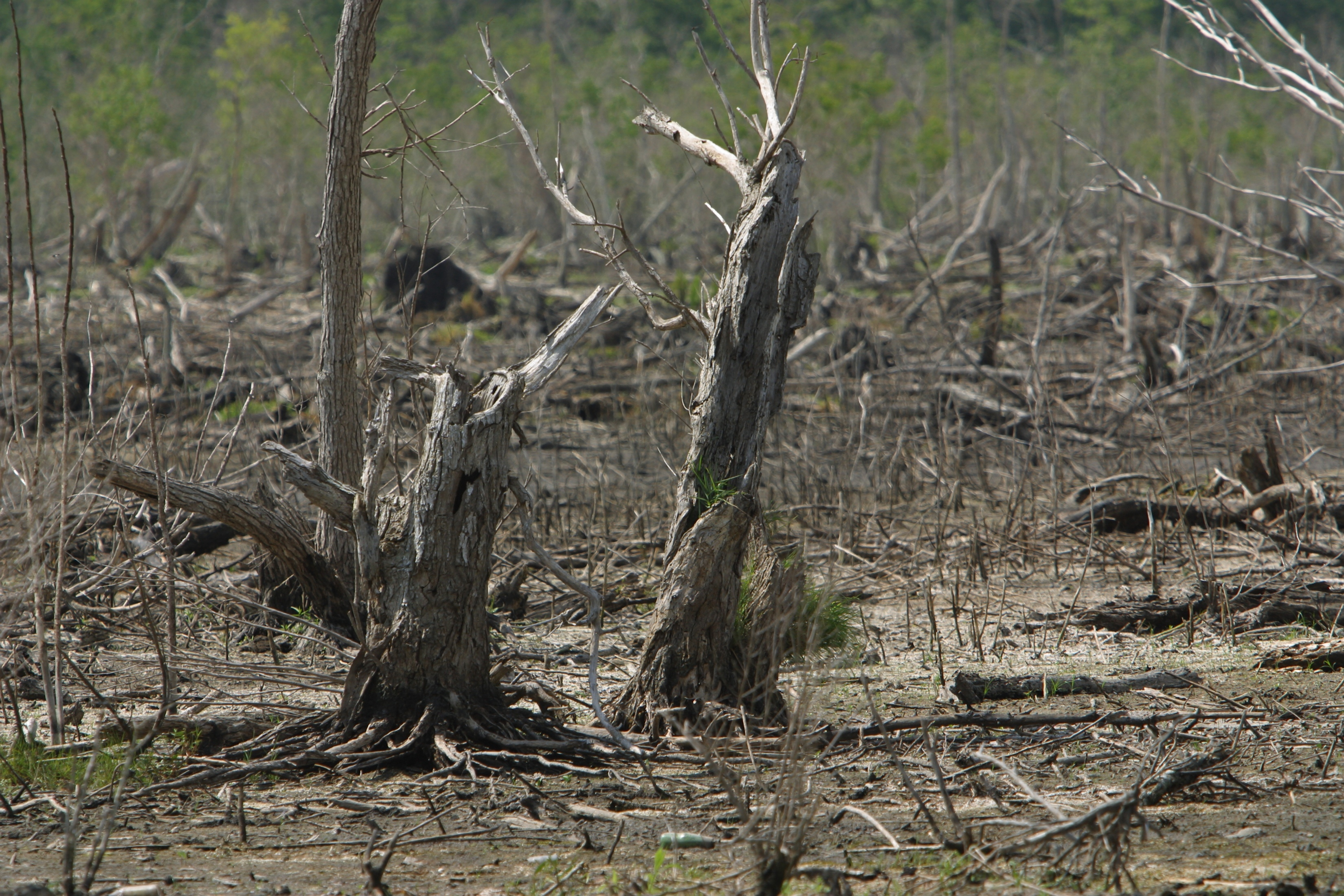 Four Consequences of Deforestation
