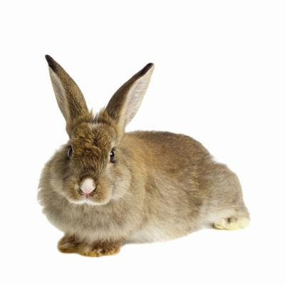 How To Get Rid Of Mites On Rabbits Animals Mom Me