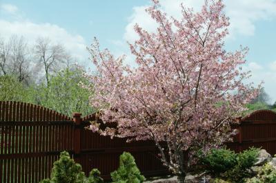 Universe Garden