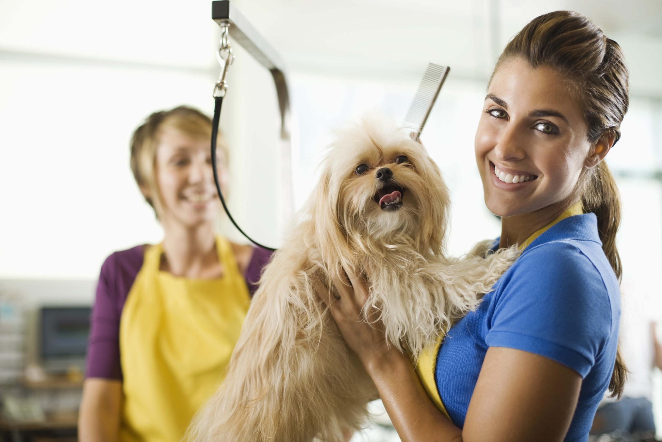What Is Required in Missouri to Start a Dog Breeding