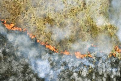 Forest Fires & Their Effects on the Environment ...