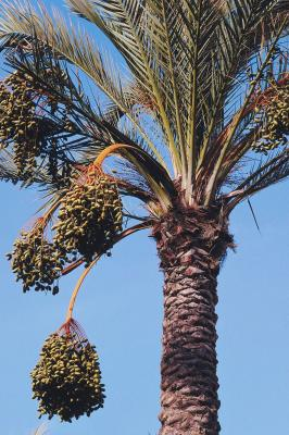 is palm fruit oil good for you live well jillian michaels. Black Bedroom Furniture Sets. Home Design Ideas