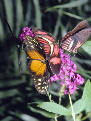 The Differences Between Chaste Trees Amp Butterfly Bushes