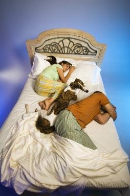 Does It Make A Difference If The Dog Sleeps In The Bed