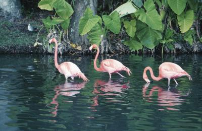 Photography Tours Of The Everglades Usa Today