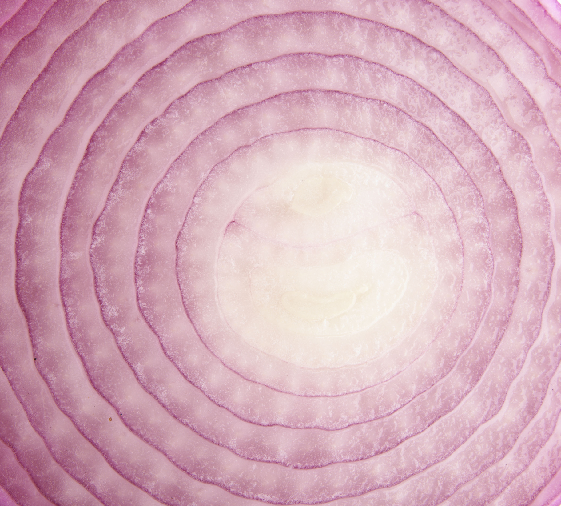 A slice of red onion contains 15 calories.