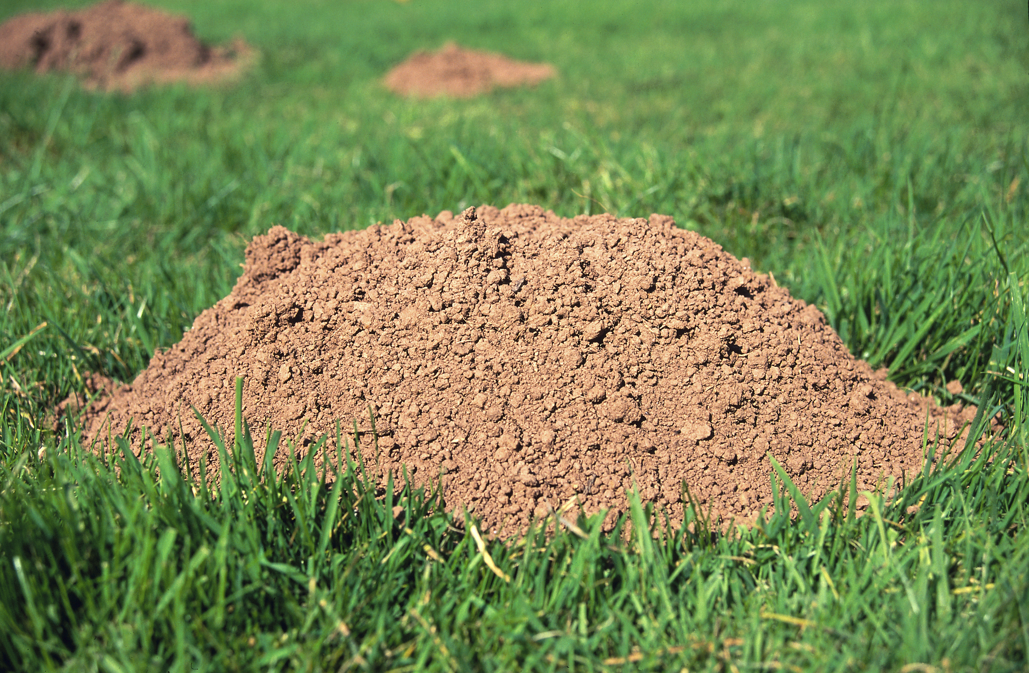 how to tell what animal is digging in your back garden ehow uk