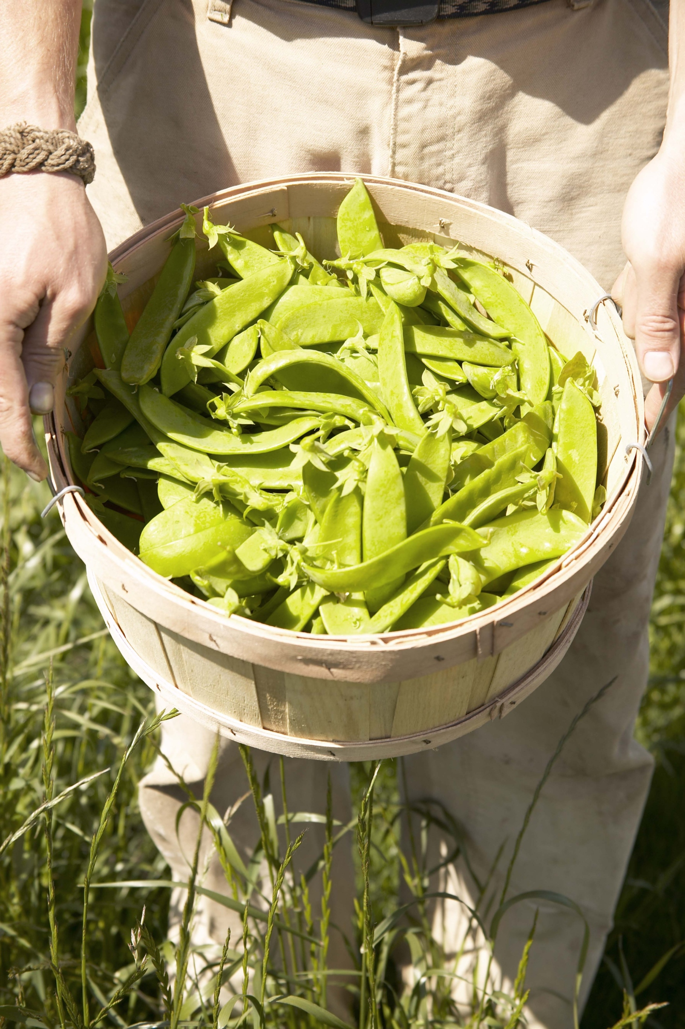 Snap peas are a healthy high-protein snack or meal addition.