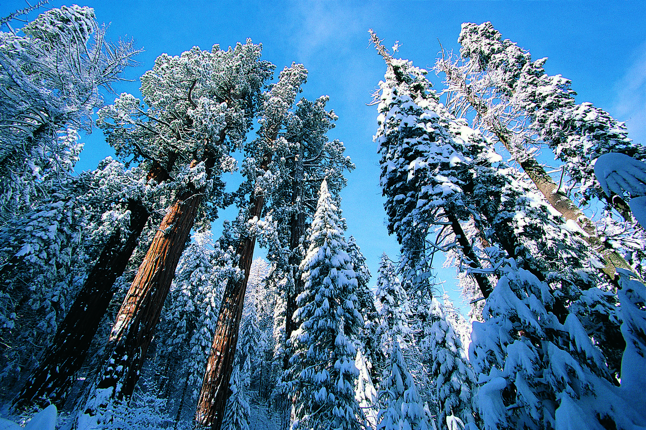 Visiting Sequoia National Park In December Usa Today