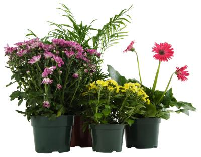 How To Make Potted Plants Survive A Week Without Water