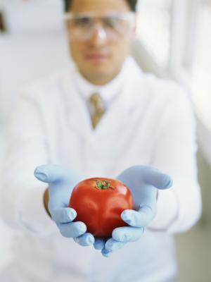 how to become a food scientist