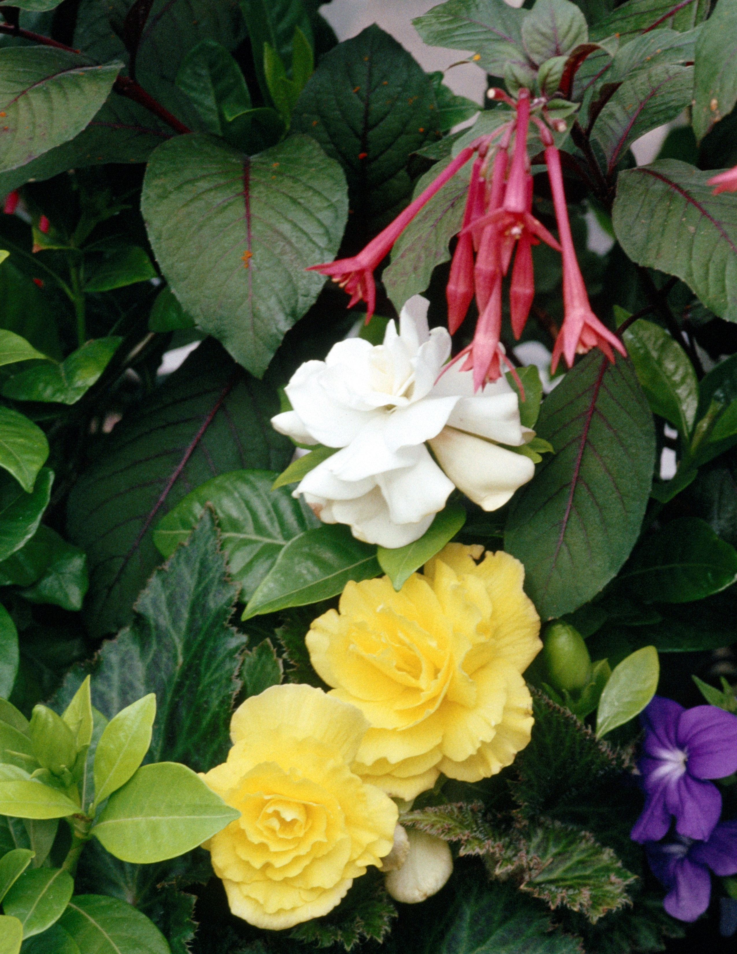 plantas de sombra para cultivar en macetas al aire libre ehow en espaol