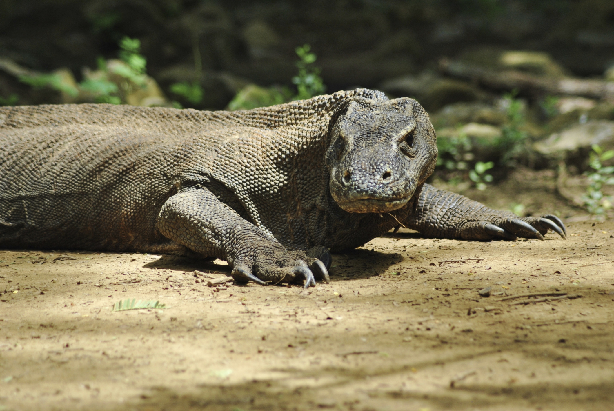 What Are the Adaptations for Reptiles to Live on Land? | Sciencing