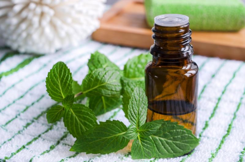 Image result for essential oil mint