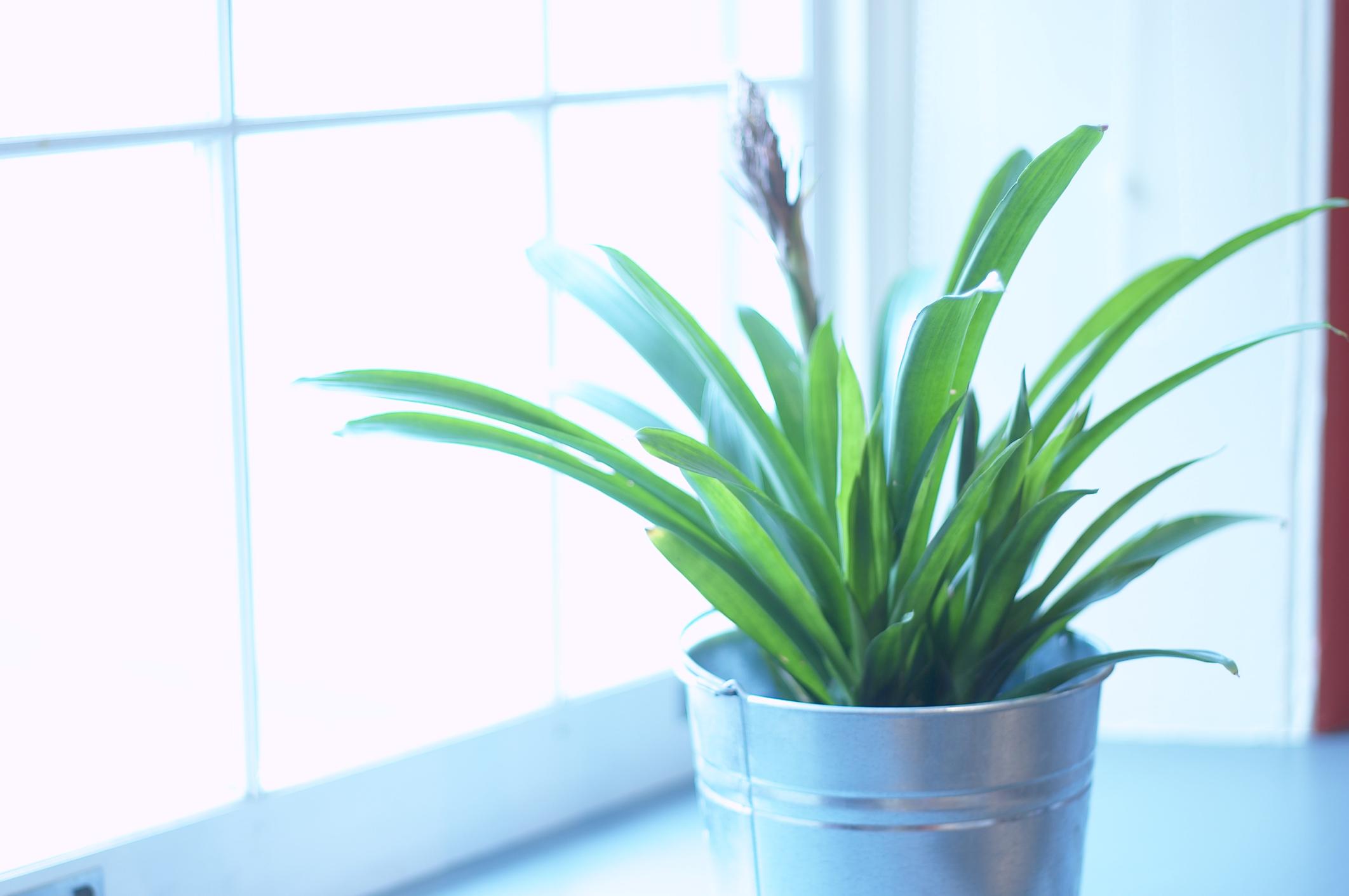 The Best Plant Light Spectrum For Growing Flowering Plants