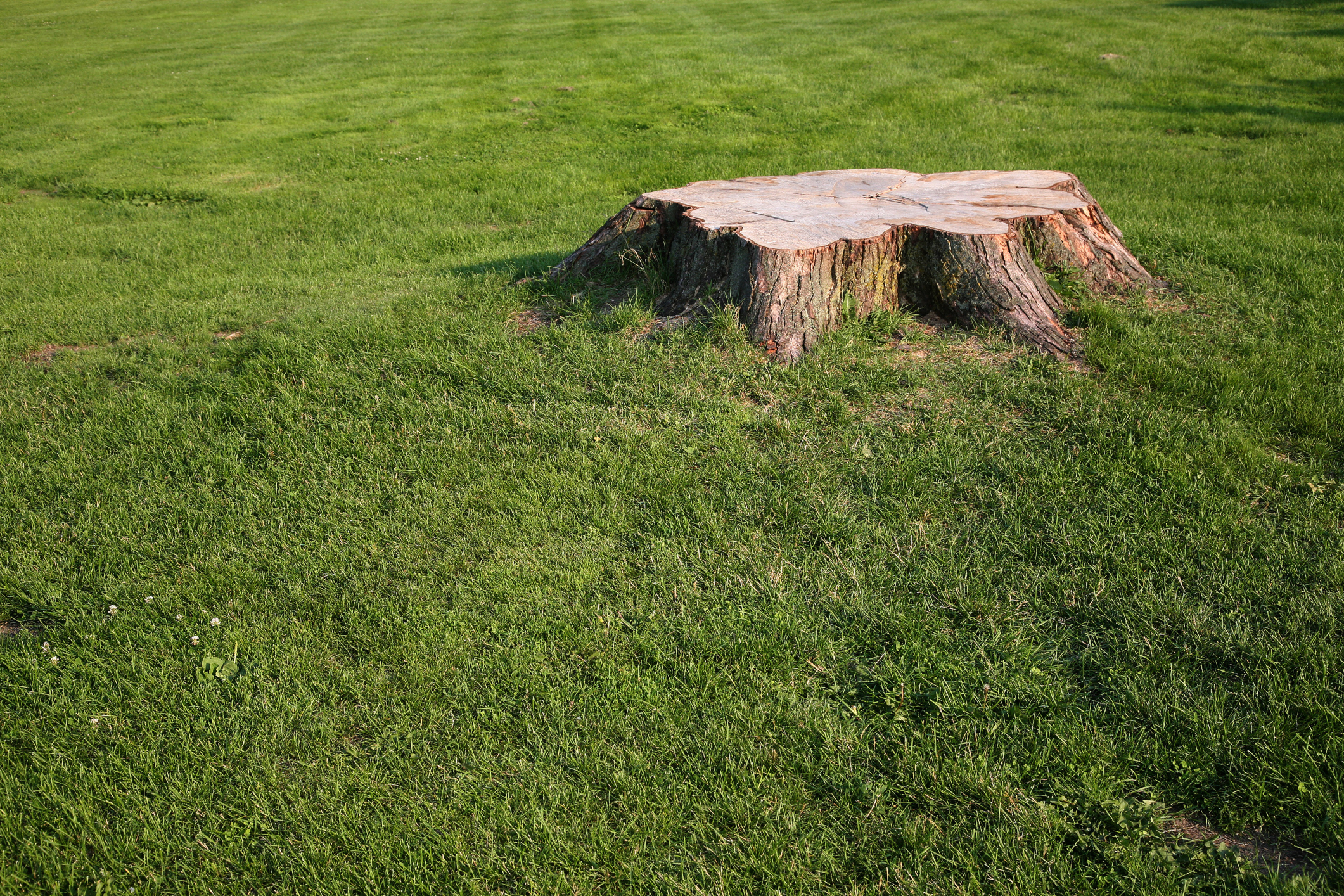Chemicals That Kill Tree Roots Home Guides Sf Gate