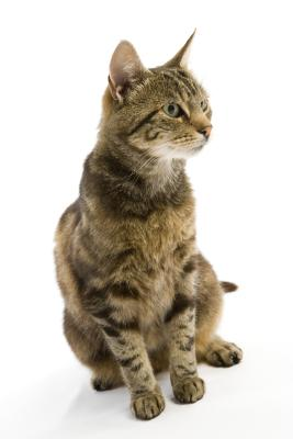 Ultrasonic pest repellants can affect your cat.